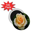 Yellow Rose 1.75  Magnet (100 pack)