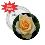 Yellow Rose 2.25  Button (100 pack)
