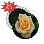 Yellow Rose 2.25  Magnet (100 pack)