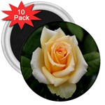 Yellow Rose 3  Magnet (10 pack)