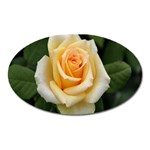 Yellow Rose Magnet (Oval)