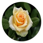 Yellow Rose Magnet 5  (Round)