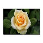 Yellow Rose Sticker A4 (100 pack)