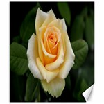 Yellow Rose Canvas 8  x 10