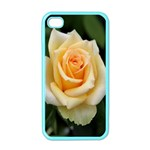 Yellow Rose Apple iPhone 4 Case (Color)