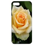 Yellow Rose Apple iPhone 5 Hardshell Case with Stand