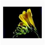Yellow Freesia Flower Glasses Cloth (Small)