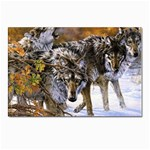 Wolf Family Love Animal Postcard 4 x 6  (Pkg of 10)