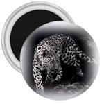 Animal Leopard 3  Magnet