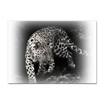 Animal Leopard Sticker A4 (10 pack)