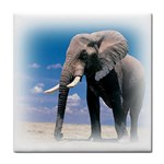 Animals Elephants Lonely But Strong Tile Coaster