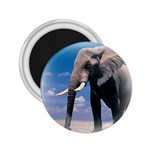 Animals Elephants Lonely But Strong 2.25  Magnet
