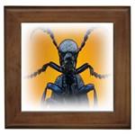 Animal Oil Beetle Framed Tile