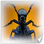 Animal Oil Beetle Canvas 16  x 16