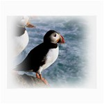 Atlantic Puffin Birds Glasses Cloth (Small, Two Sides)