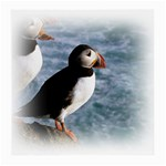 Atlantic Puffin Birds Glasses Cloth (Medium, Two Sides)