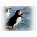 Atlantic Puffin Birds Glasses Cloth (Large, Two Sides)
