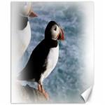 Atlantic Puffin Birds Canvas 11  x 14