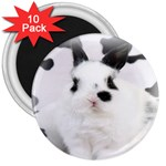 Animals Rabbits Brothers 3  Magnet (10 pack)