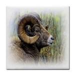 Bighorn Sheep Tile Coaster