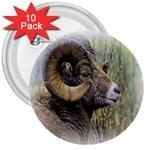 Bighorn Sheep 3  Button (10 pack)