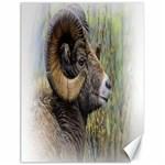 Bighorn Sheep Canvas 18  x 24