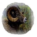 Bighorn Sheep 18  Premium Round Cushion