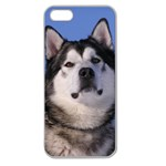 Use Your Photo Alaskan Malamute Dog Apple Seamless iPhone 5 Case (Clear)