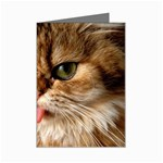 Cat Tongue Mini Greeting Card