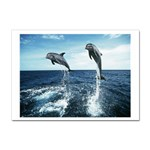 Dolphin Sticker A4 (10 pack)