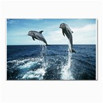 Dolphin Postcards 5  x 7  (Pkg of 10)