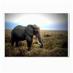 Elephant Postcard 5  x 7