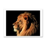 Lion Sticker A4 (100 pack)
