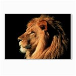 Lion Postcards 5  x 7  (Pkg of 10)