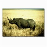 Rhino Postcards 5  x 7  (Pkg of 10)