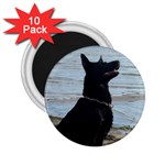 Black German Shepherd 2.25  Button Magnet (10 pack)