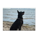 Black German Shepherd A4 Sticker