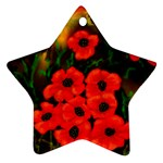 Poppies  2 Ave Hurley Ah 001 164 Png Star Ornament (Two Sides)