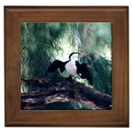 Cormorant Aussie bird Framed Tile