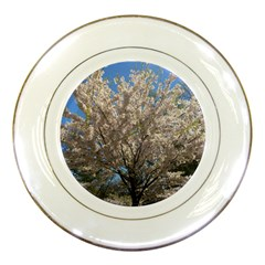Cherry Blossoms Tree Porcelain Display Plate by DmitrysTravels