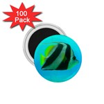 Butterfly Fish 1.75  Magnet (100 pack)