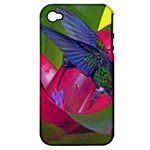 1hummingbird Flower 615 Apple iPhone 4/4S Hardshell Case (PC+Silicone)