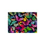 Rainbow of Butterflies 5  x 7  Desktop Photo Plaque