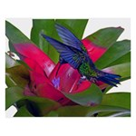 Blue Hummingbird 8  x 10  Desktop Photo Plaque