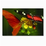 Butterfly Postcards 5  x 7  (Pkg of 10)