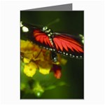 Butterfly Greeting Cards (Pkg of 8)
