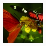 Butterfly Glasses Cloth (Medium, Two Sides)