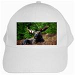 Majestic Moose White Baseball Cap