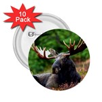 Majestic Moose 2.25  Button (10 pack)
