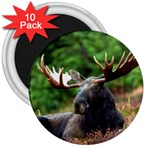 Majestic Moose 3  Button Magnet (10 pack)